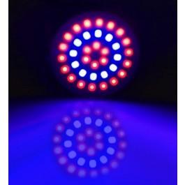 GROW LIGHT E27 3W 36 LEDS 12 BLAUW EN 24 ROOD