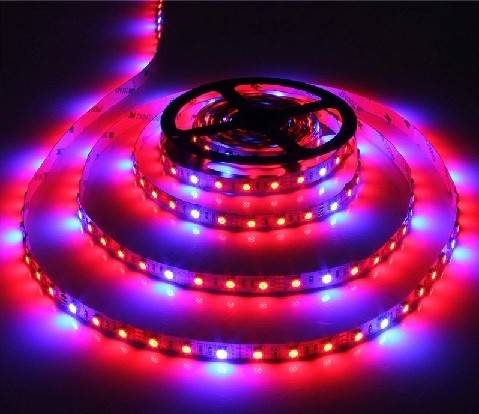 LED STRIP GROW LIGHT ROOD/BLAUW 1M X 12MM 12VDC/14.4W 60LEDSIP20