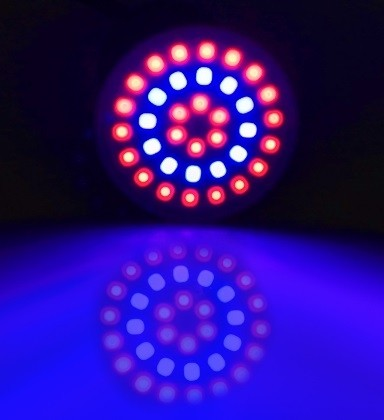 GROW LIGHT E27 3W 36 LEDS 12 BLAUW EN 24 ROOD