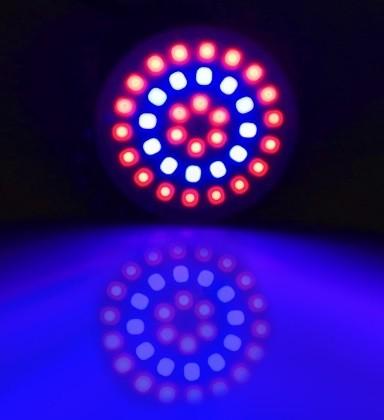 GROW LIGHT GU10 3W 36 LEDS 12 BLAUW EN 24 ROOD
