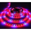 LED STRIP GROW LIGHT ROOD/BLAUW 1M X 12MM 12VDC/14.4W 60LEDSIP65